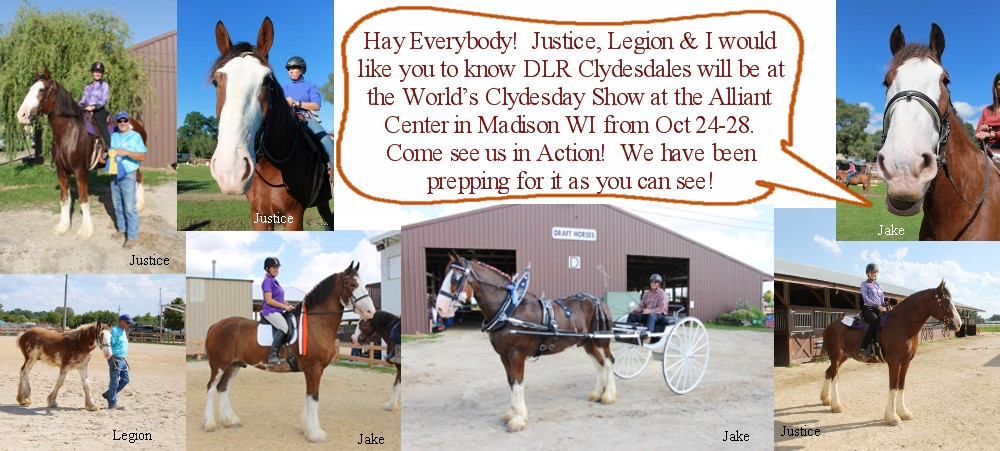 2018 World Clydesdale Show