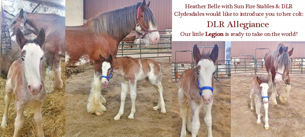 Introducing Legion--new colt at SFS & DLR Clydes
